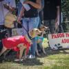 Caninos y felinos encontraron hogar en Popayán