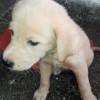 Se efectuó jornada de limpieza para el bienestar animal en vivienda de Popayán