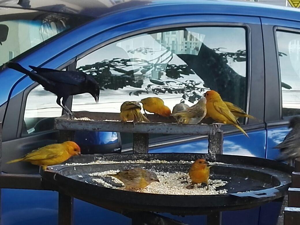 Son más de 200 pajaritos los que durante todo el día cantan, vuelan y comen en el barrio El Modelo. / Foto: María Isabel Campos