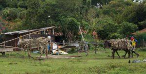 Comunidades exigen más tierra y no existen cifras oficiales. Se necesita al Gobierno y las comunidades construyendo consensos. / Fotografías Olga Portilla.